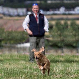 Dog Training Session – One Hour