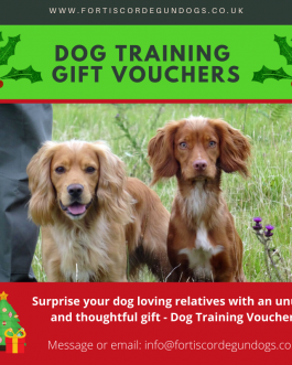 Dog Training Session – One Hour